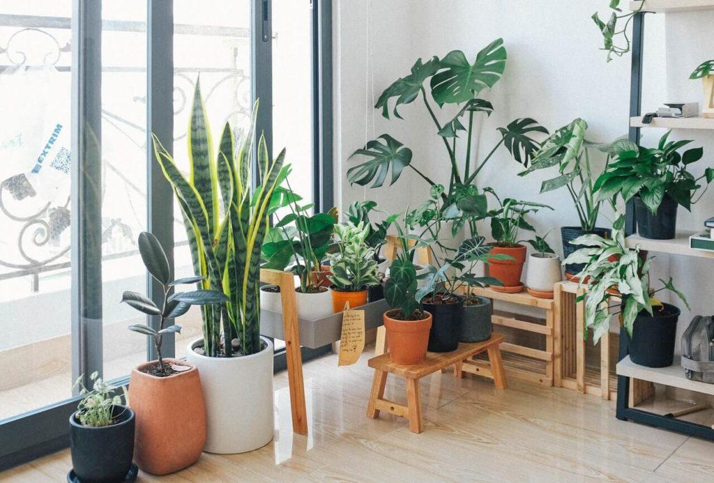 Rośliny domowe w salonie